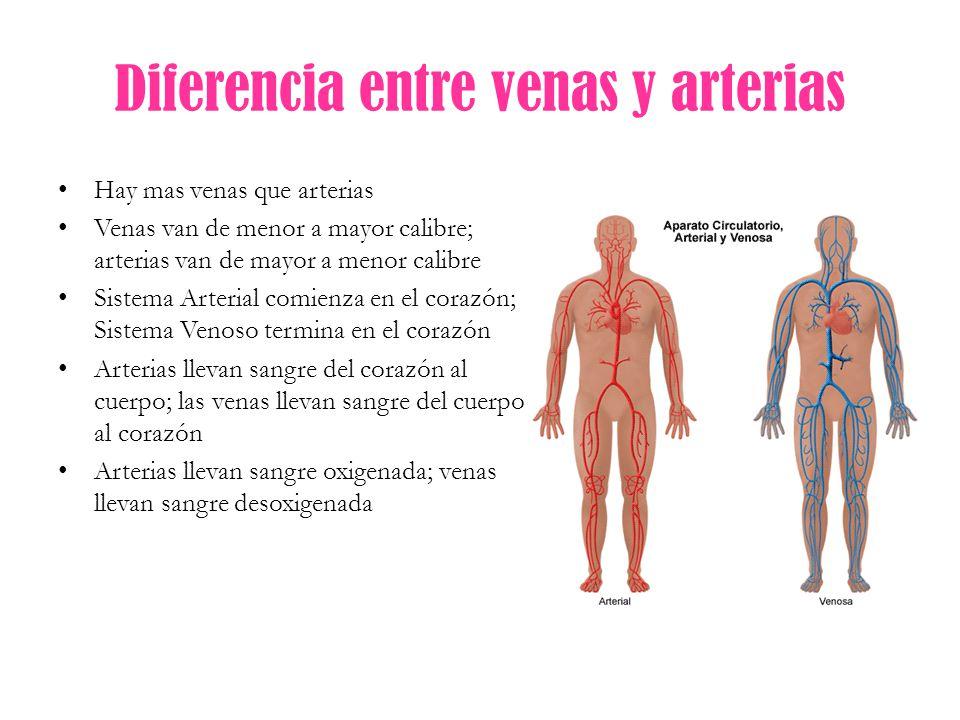 Diferencia entre vena y arteria
