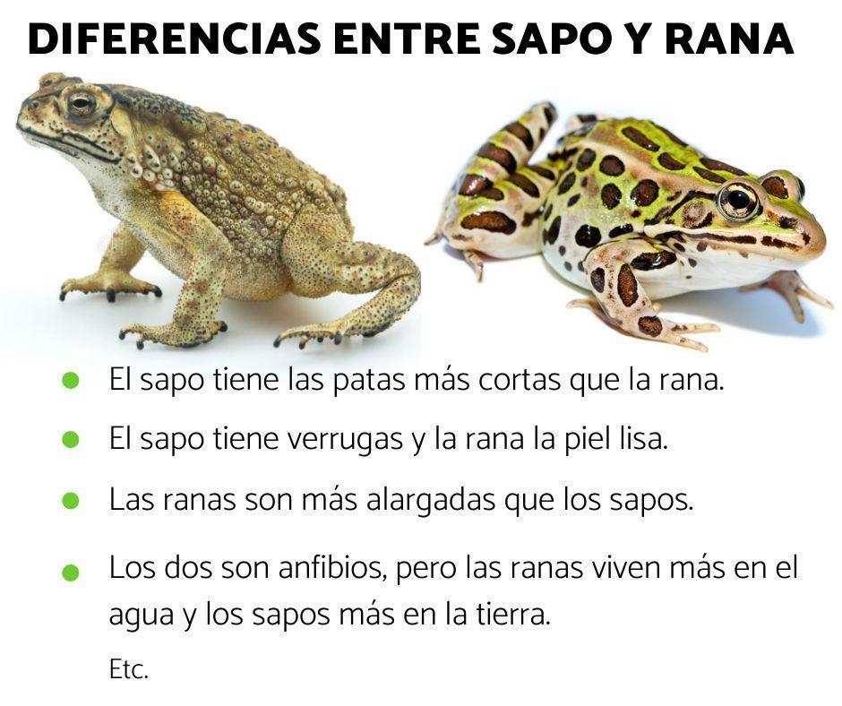 diferencias entre ranas y sapos